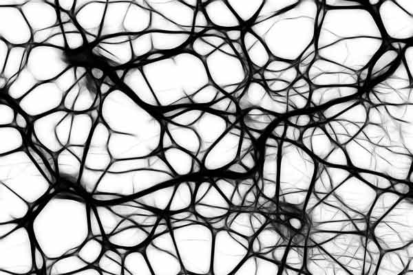 neurons science quiz